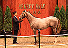 Tapit Colt a Hit at Yearling Sale in Japan