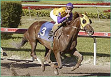 Jackpot Hits it Big in Gulfstream Park 'Cap