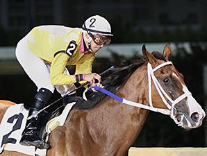 Jax and Jill wins the 2013 Sylvia Bishop Memorial Stakes.