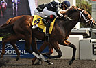 No Lack of Intrigue in Packed Juvenile Turf