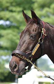 Legend John Henry Euthanized