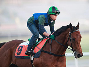 Joy and Fun preps for the Dubai World Cup race card March 24.