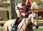 Featured Horse Profile: Joyful Victory
