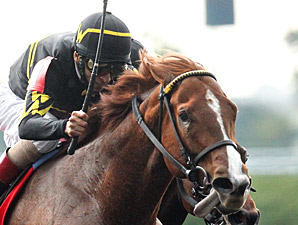 Judy the Beauty wins the 2013 Thoroughbred Club of America Stakes.