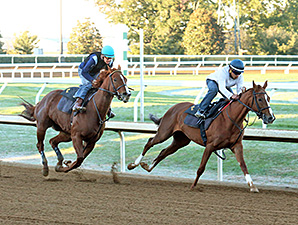 Judy the Beauty, outside, works with Kitten's Top Cat, inside, at Keeneland Oct. 19.