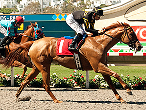 Judy the Beauty wins the Rancho Bernardo.