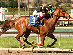 Judy the Beauty wins the Las Flores Stakes.