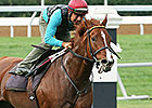 Champion Judy the Beauty Back in TCA Stakes