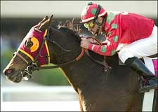 Jungle Prince Pounces in Hollywood Turf Express