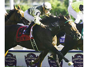 Northern Dancer Inquiry Goes to Just as Well