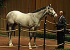 Langfuhr Colt Tops Keeneland Opener