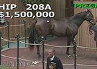 Keeneland November Sale 2014 - Hip 208A Ring