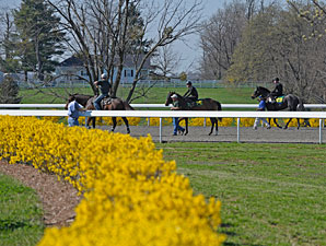 Keeneland April Sale: Hot Horses
