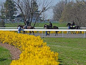 Keeneland April Sale: Hot Horses