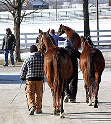 Keeneland January Third Session Posts Gains