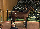 Yearling Colt Tops Keeneland January Day 3