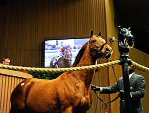 Numbers Up for Keeneland January Sale