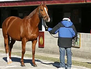Keeneland January Sale Preview