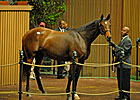 Giant&#39;s Causeway Filly Brings $2,550,000
