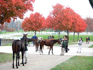 Keeneland Sale Continues to Show Strength