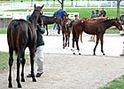 Court Vision's Half Brother Tops at Keeneland