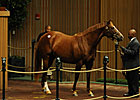 Camargue Second Mare to Bring Seven Figures