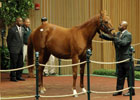 Keeneland November Sale Day 2 Wrap