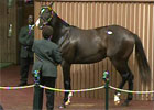 Keeneland November Sale Day 5 Wrap