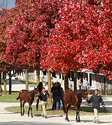 Keeneland November Ends With Big Gains