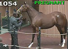 Kee Nov 2014: Hip 1054 in the Ring
