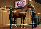 Keeneland November Sale 2014 - Hip 246 Aloof