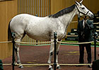 Kee Nov 2014: Hip 272, Ciao Bella, in the Ring