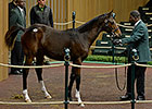 Keeneland Catalogs 4,476 for November Sale