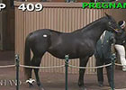 KEE Nov 2014: Hip 409 in the RIng
