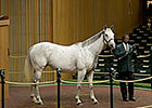 Mare in Foal to Dubawi Sells for $1.45M