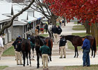 'Vibrant' Keeneland Sale Ends With Gains