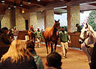 Pioneerof the Nile Colt Paces Keeneland Sale