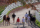 Keeneland: $190,000 Graydar Colt Leads Gains