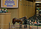 Shadwell Buys Tapit Filly for $1.1M