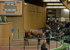 Photo Call Brings $3M at Keeneland