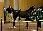 Honor Code's Half Brother Brings $2.6 Million