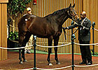 Seven-Figure Horses Already Pass 2012 Total
