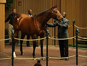 Cat Moves Sells for $2.4 Million at Keeneland