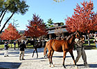 Half Sister to Uncle Mo Tops Keeneland Day 5