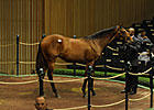 Leon Pays $1.2 Million for Bernardini Filly