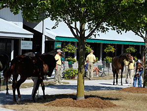 Tapit Colt Tops Keeneland Sale Session