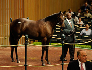 Jacksons Buy Dynaformer Filly for $900,000