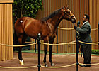 Medaglia d&#39;Oro Colt Brings $600,000 