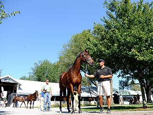 Sellers' Profits Up at Keeneland Sept. Sale