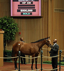 Tiznow Filly Fetches $500,000 at Keeneland